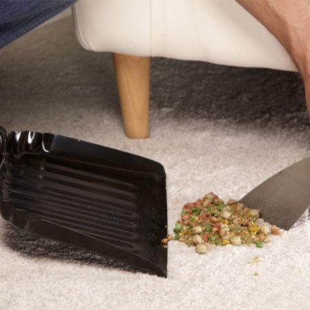 Carpet Cleaning Tips For Pet Owners The Family Handyman