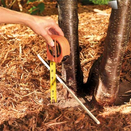 <b>Spread the mulch wide, but not too deep</b><br/>Make a wide circle of mulch, but don&rsquo;t get it too close to the bark, and don&rsquo;t make it too deep.