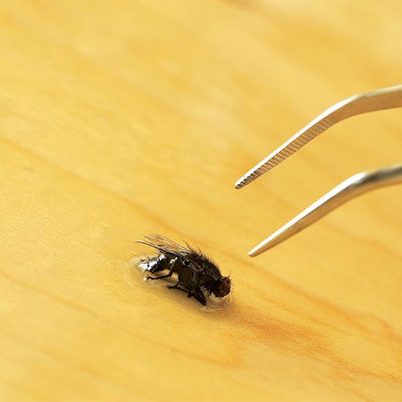 <b>Pluck out problems</b></br> <p>Tweezers are an essential emergency tool. If a fly, brush bristle or lint ends up in the finish, you can surgically remove it.</p>