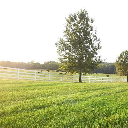 <b>Achieve long, straight lines</b></br> <p>Having trouble getting straight lines in your yard? Here's an old trick used by farmers to form straight rows in their fields. Pick a spot across the yard, like a fence post or tree, and start walking straight at it: Don't look down; don't look back; just concentrate on that spot ahead. Use that line as a guide for the rest of the rows.</p>