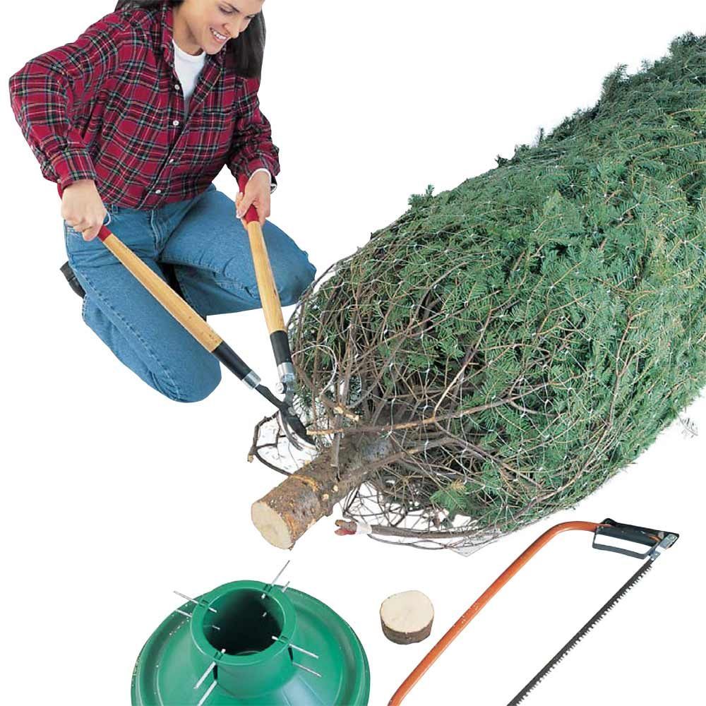 Christmas Tree Basics