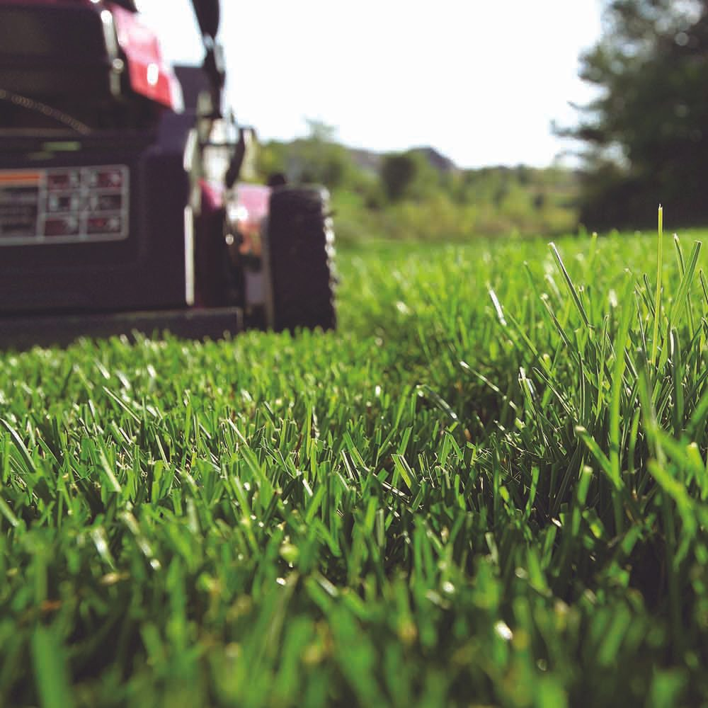 Lawn Service And Landscape: The Family Handyman