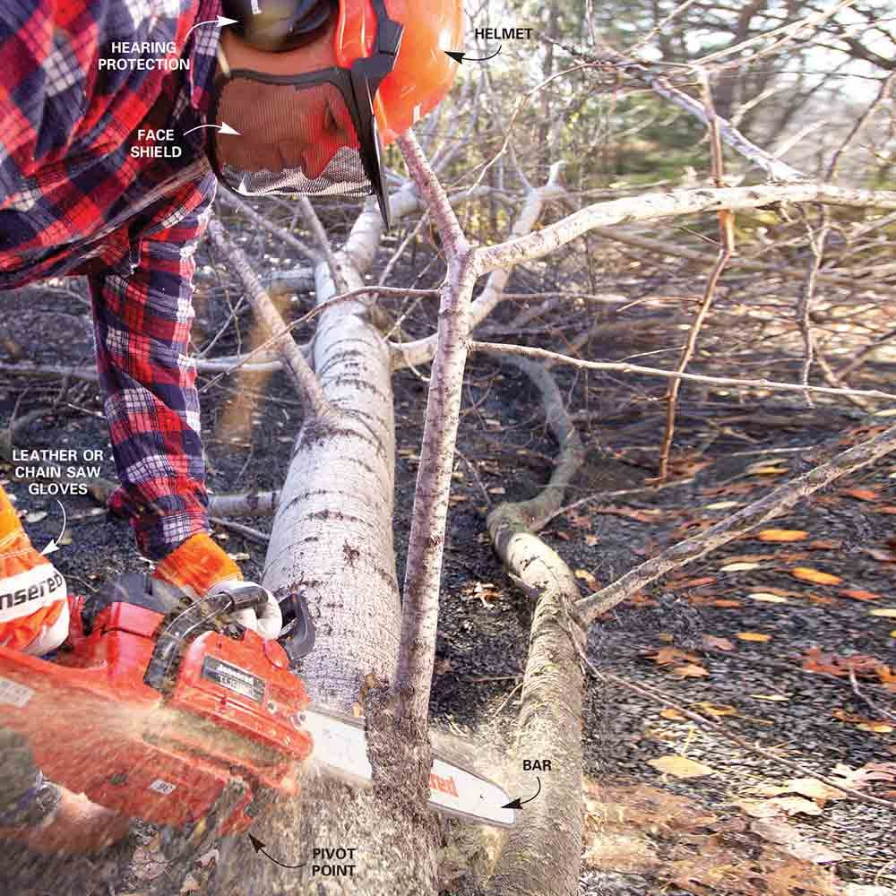 The Family Handyman The Family: Cut Down A Tree Safely