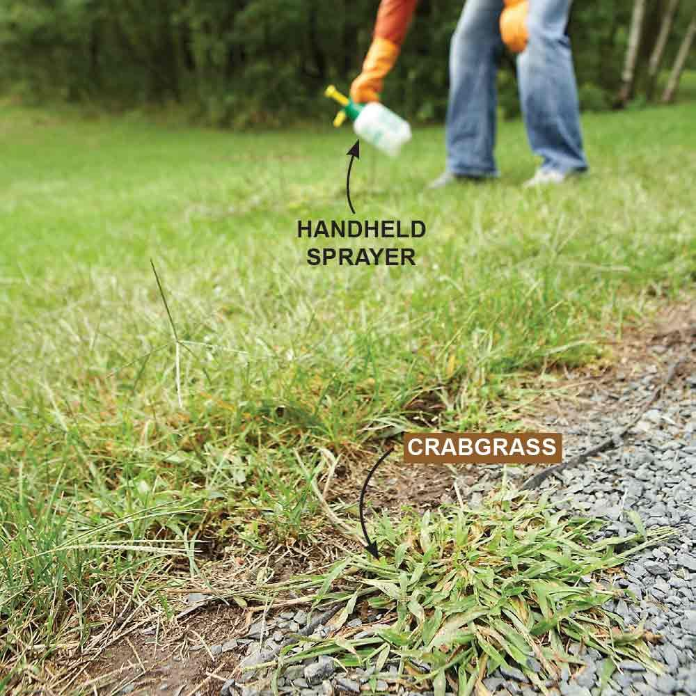 Kill Annual Grassy Weeds: Late Season