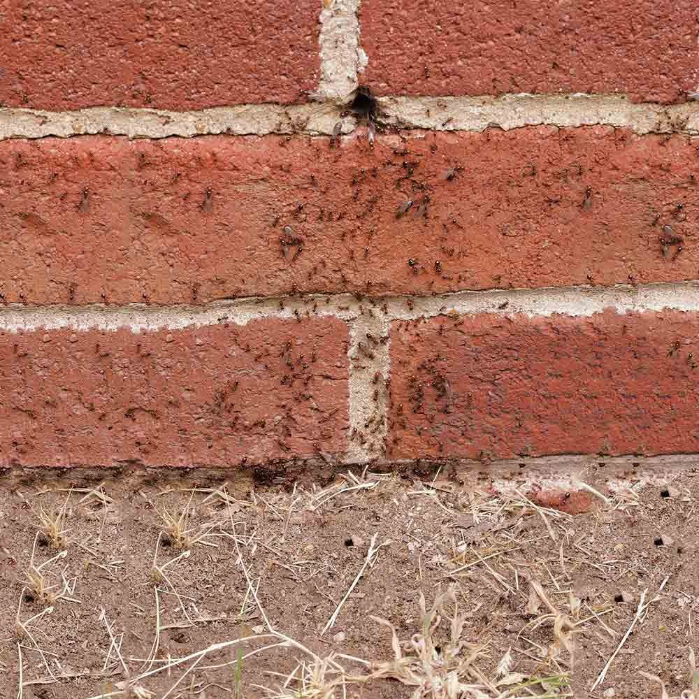 How To Get Rid Of Ants The Family Handyman