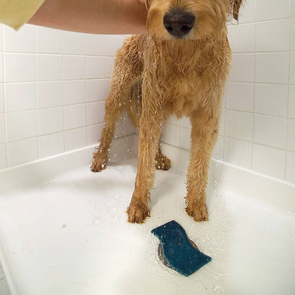 14 Cleaning Tips Every Dog Or Cat Owner Should Know The