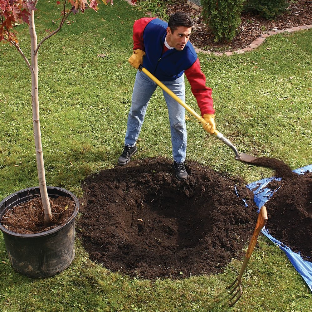 Tips For Trouble Free Tree Planting The Family Handyman