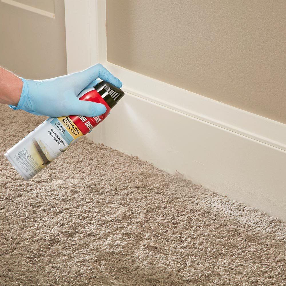 Can Bed Bugs Stay In Your Carpet - Carpet Vidalondon