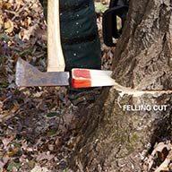 Use Wedges on Big Trees