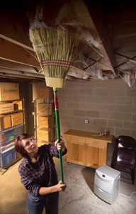 11 Strategies For Do It Yourself Pest Control The Family