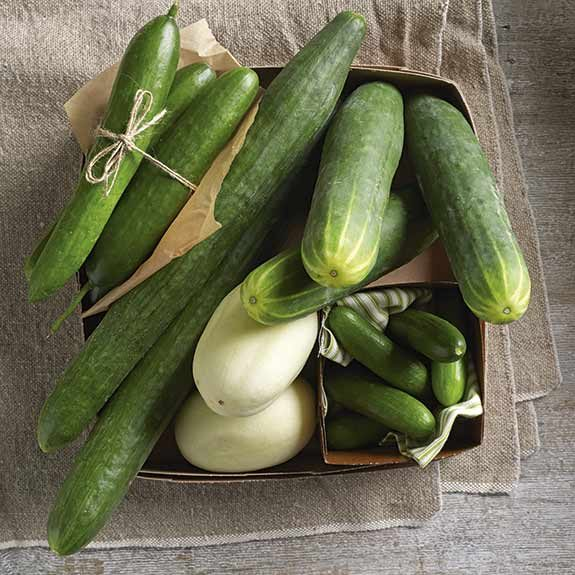 Fresh cucumbers for pickling at home.