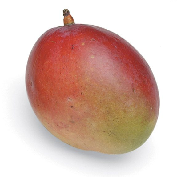 A ripe and fresh whole mango with skin on.