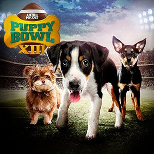 7 Reasons You Should Have a Puppy Bowl Viewing Party