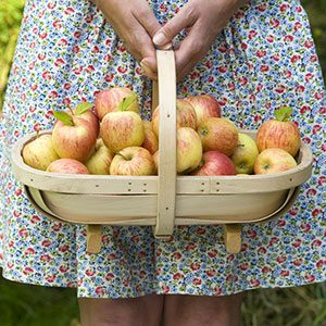 Why You Should Never, Ever Shake an Apple Tree (and Other Handy Tips for Apple Picking)