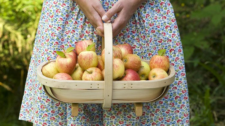 Person in a blue and red floral-print dress holding the handle of a basket overflowing with freshly picked apples