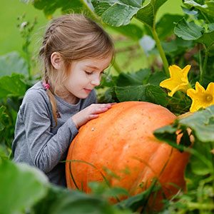 6 Things You Need to Know Before You Go Pumpkin Picking