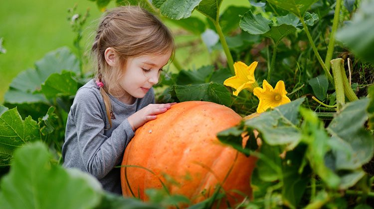 Little kid hugging a large orange pumpkin in the thick of heavy greenery