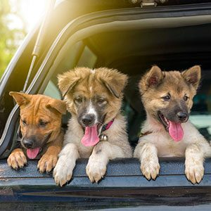 10 Tips for Surviving a Road Trip With Your Dog