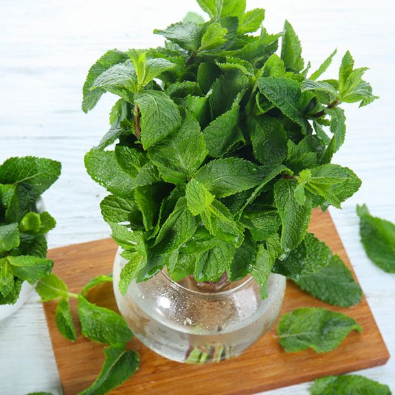 How to Store Fresh Herbs the Right Way