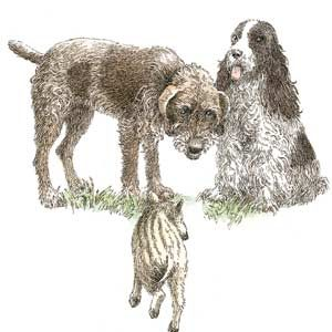 Sketch of three dogs
