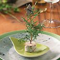 Birch Bark Centerpiece