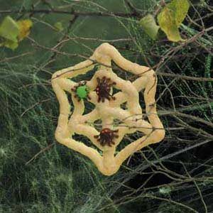 Spiderweb Cookies Recipe