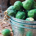 How to Grow Brussels Sprouts Photo