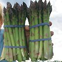 Asparagus Farm Photo