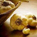 How to Grow Garlic Photo