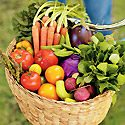 How to Grow Vegetables Photo