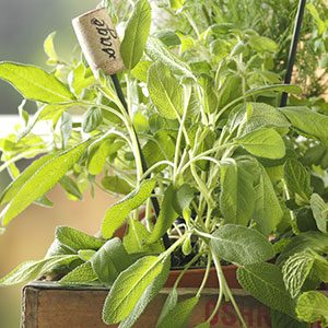 Top 10 Herbs For Your Kitchen Garden Taste Of Home