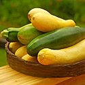 How to Grow Summer Squash Photo