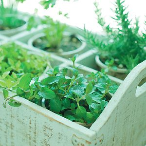 Top 10 Herbs for Your Kitchen Garden